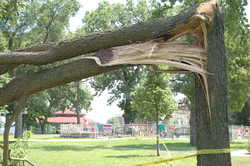 Hackberry Damage